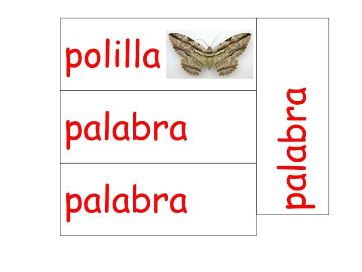 polilla