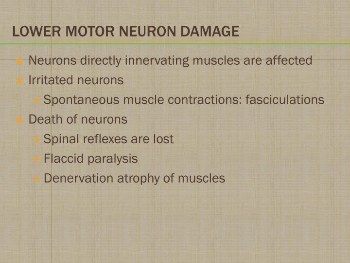 Neurons directly innervating muscles are affected