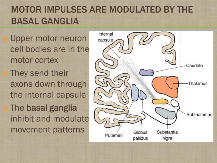 Upper motor neuron cell bodies are in the motor cortex