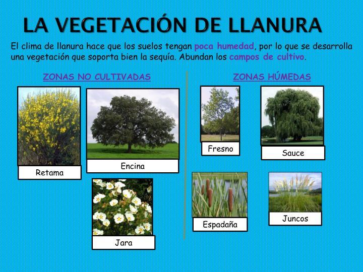 La vegetación de llanura