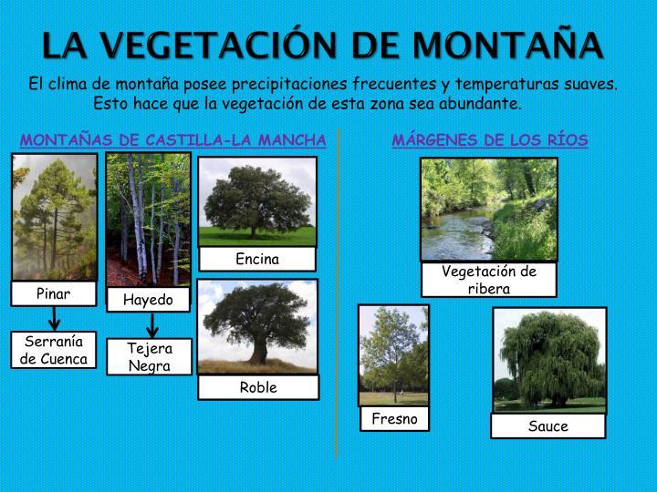 La vegetación de montaña