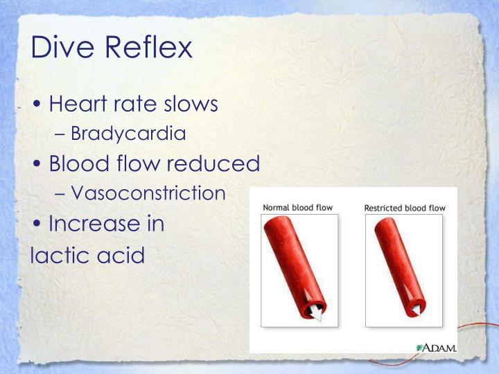 Dive Reflex