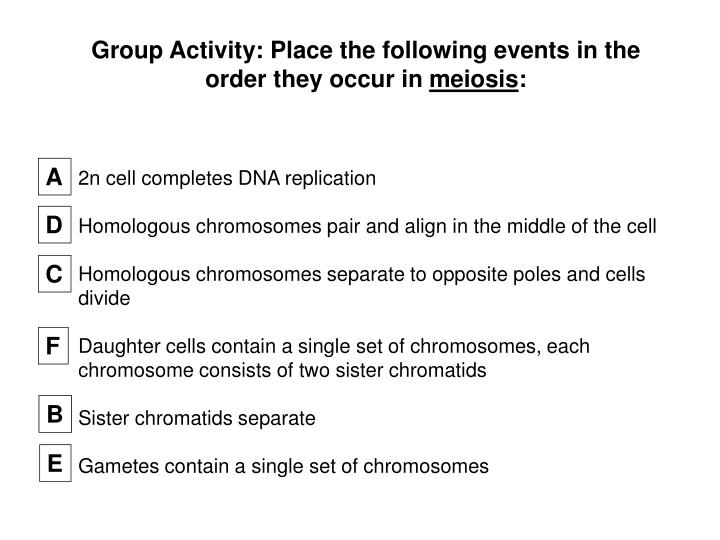 Group Activity: Place the following events in the order they occur in