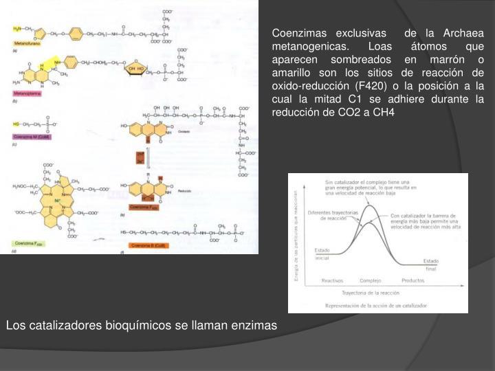 Coenzimas exclusivas  de la Archaea metanogenicas. Loas átomos que aparecen sombreados en marrón o amarillo son los sitios de reacción de oxido-reducción (F420) o la posición a la cual la mitad C1 se adhiere durante la reducción de CO2 a CH4