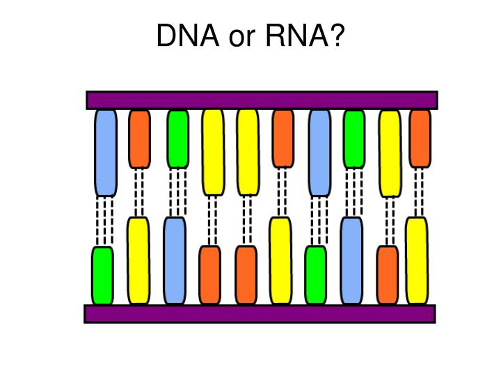 DNA or RNA?