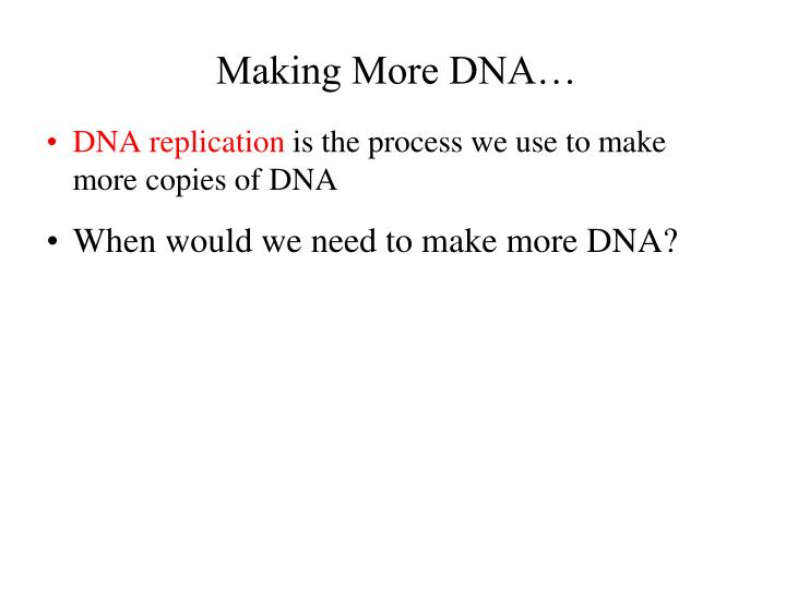 Making More DNA…