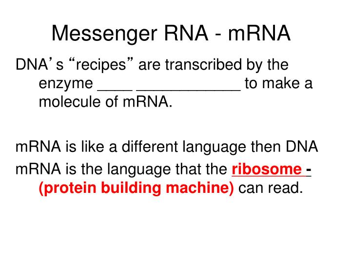 Messenger RNA - mRNA