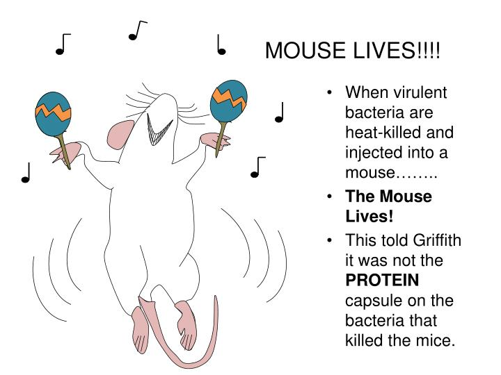 MOUSE LIVES!!!!