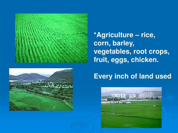 *Agriculture – rice, corn, barley, vegetables, root crops, fruit, eggs, chicken.