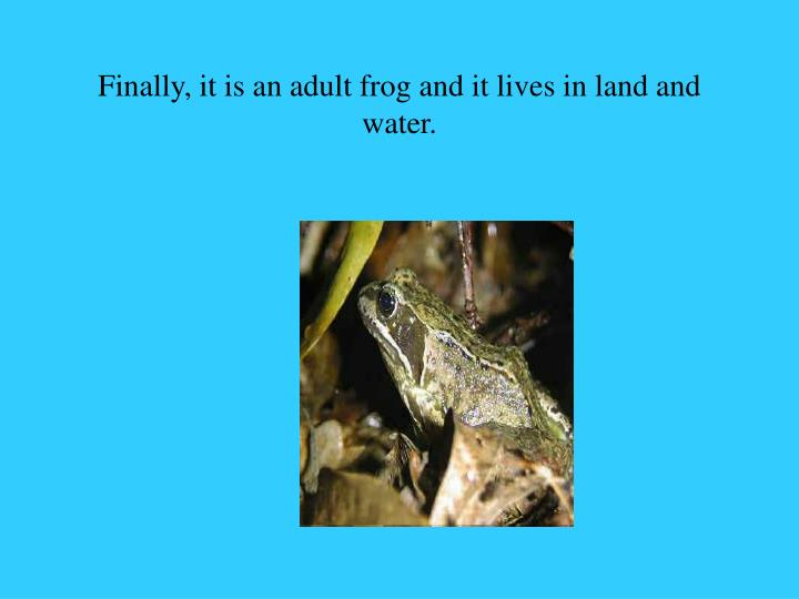Finally, it is an adult frog and it lives in land and water.