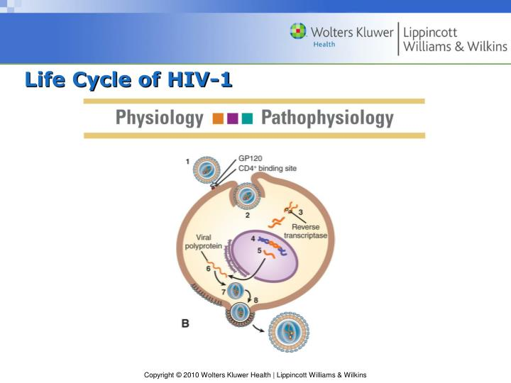Life Cycle of HIV-1