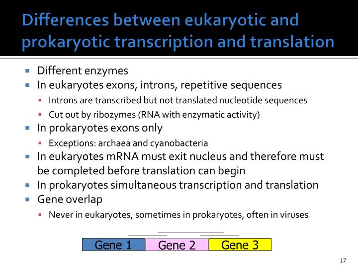 Differences between eukaryotic and prokaryotic transcription and translation