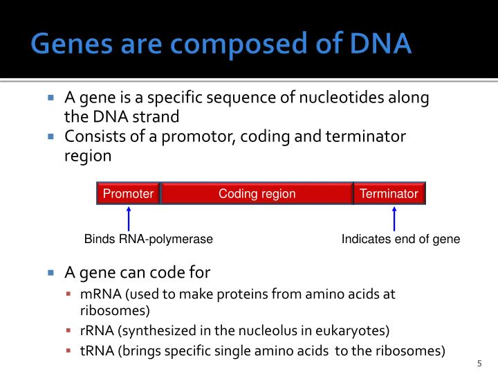 Genes are composed of DNA