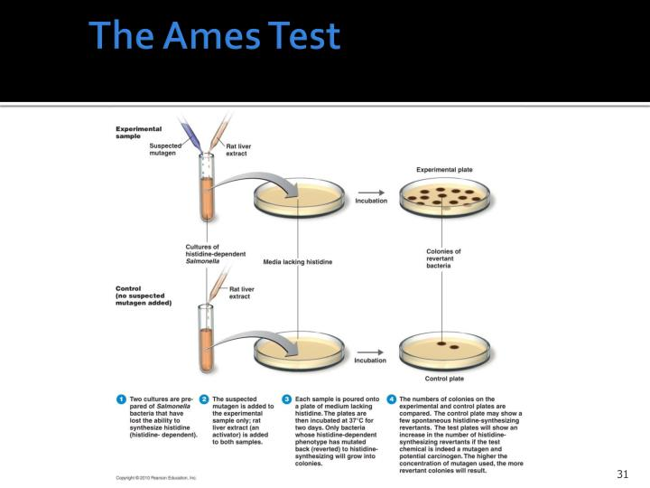 The Ames Test