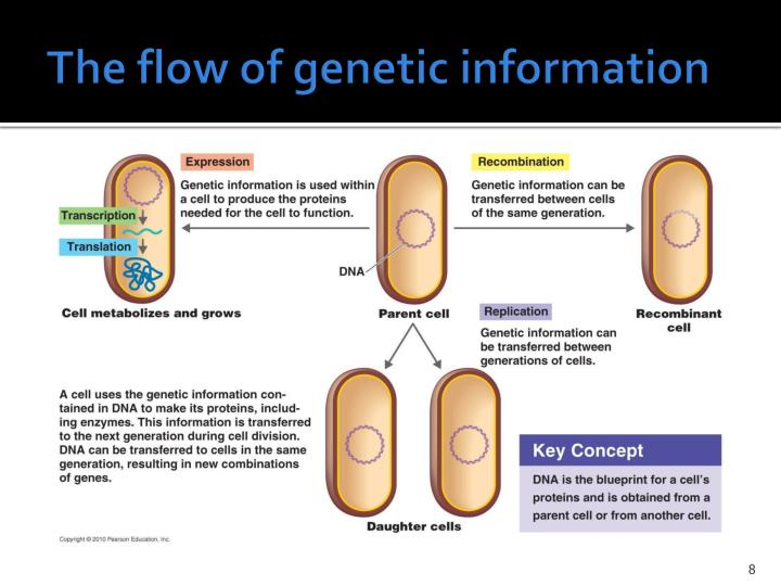The flow of genetic information