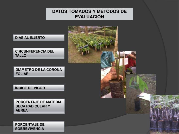 DATOS TOMADOS Y MÉTODOS DE EVALUACIÓN