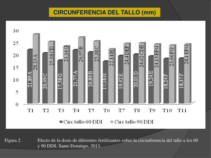 CIRCUNFERENCIA DEL TALLO (mm)