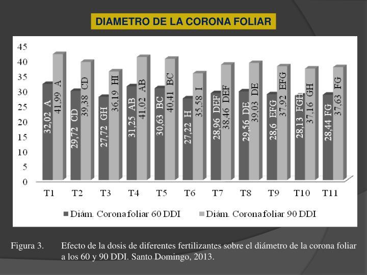 DIAMETRO DE LA CORONA FOLIAR