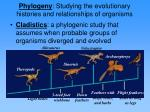 phylogeny studying the evolutionary histories and relationships of organisms