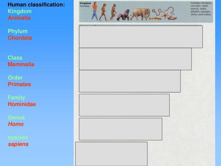 Human classification: