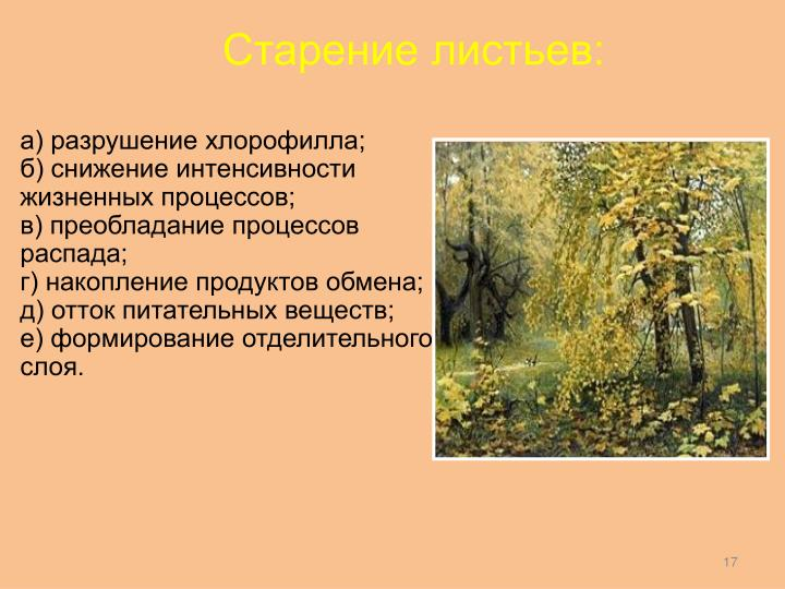 Старение листьев: