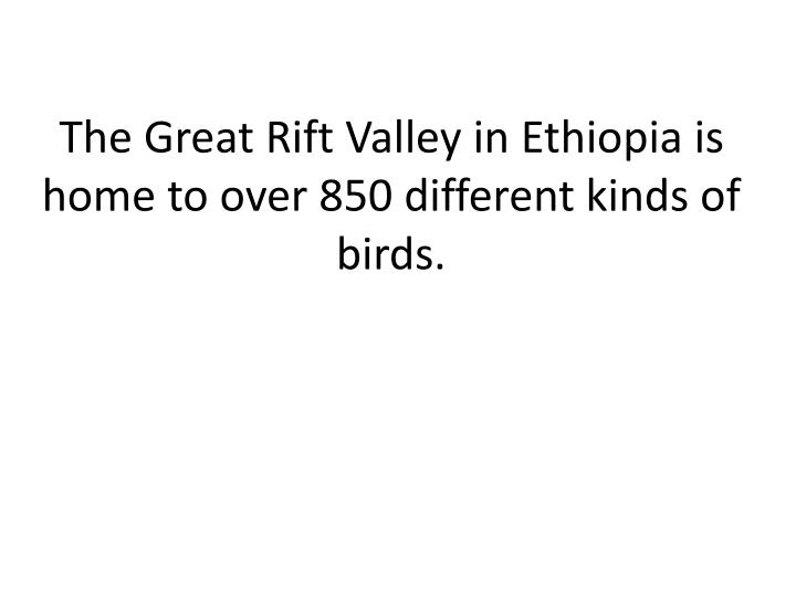 The Great Rift Valley in Ethiopia is home to over 850 different kinds of birds.