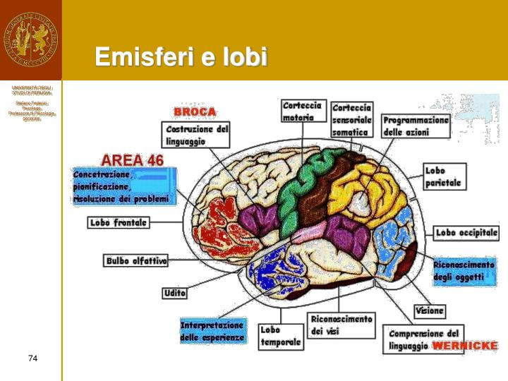 Emisferi e lobi