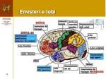 emisferi e lobi2