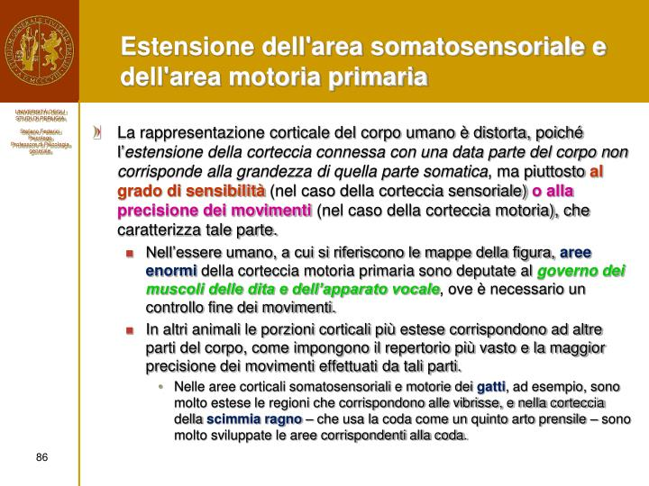 Estensione dell'area somatosensoriale e dell'area motoria primaria