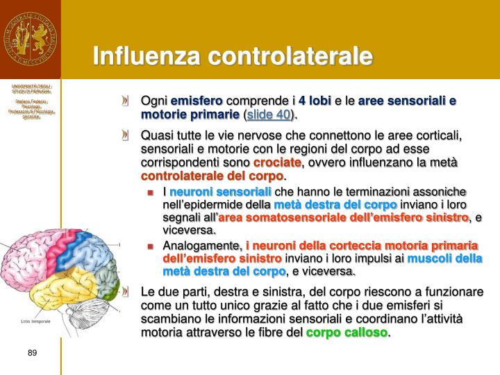Influenza controlaterale