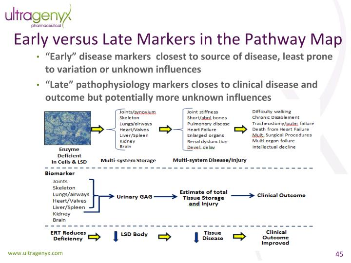 Early versus Late Markers in the Pathway Map