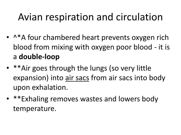 Avian respiration and circulation