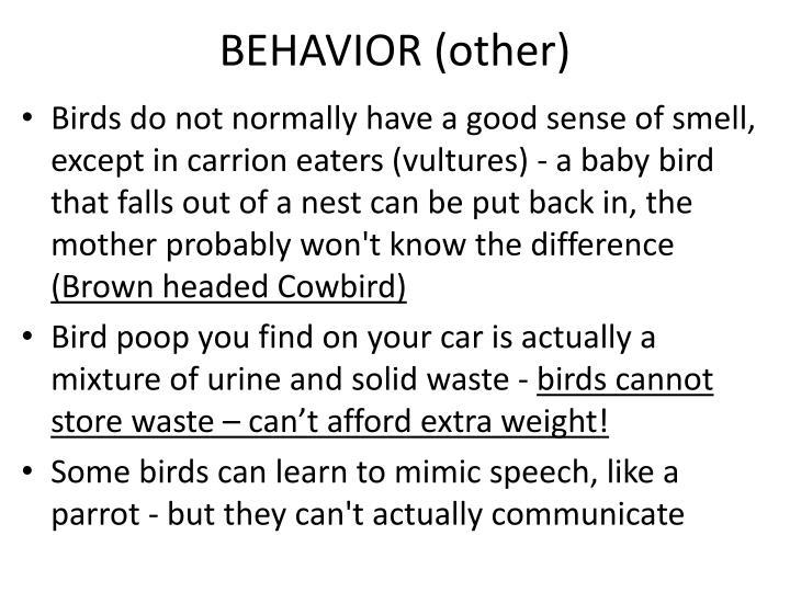 BEHAVIOR (other)
