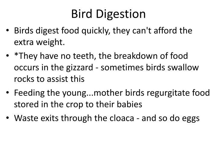 Bird Digestion