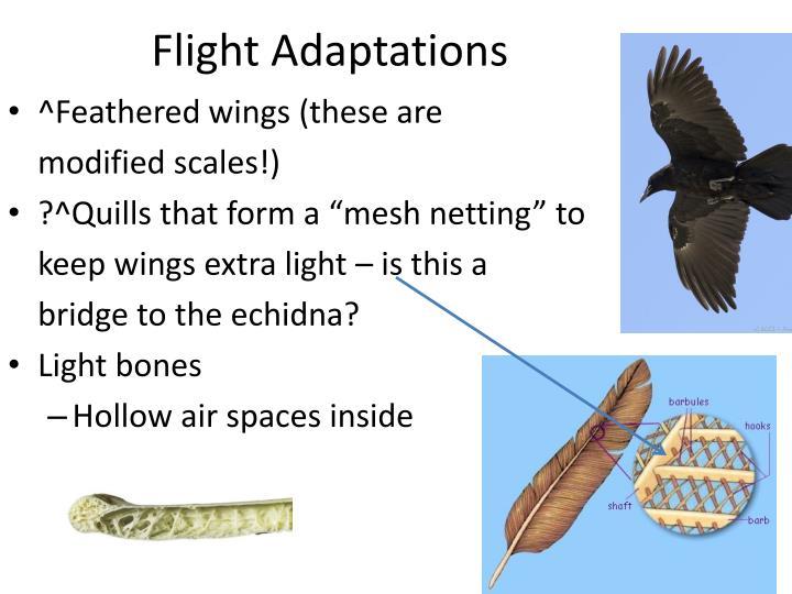 Flight Adaptations