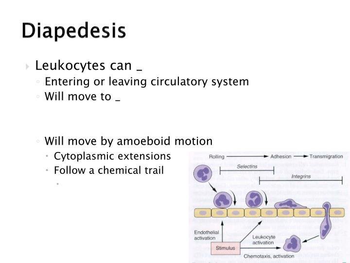 Diapedesis