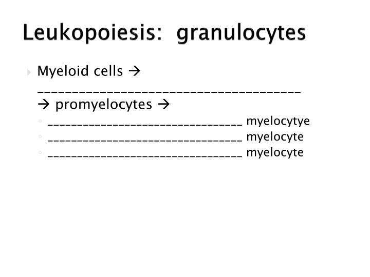 Leukopoiesis:  granulocytes