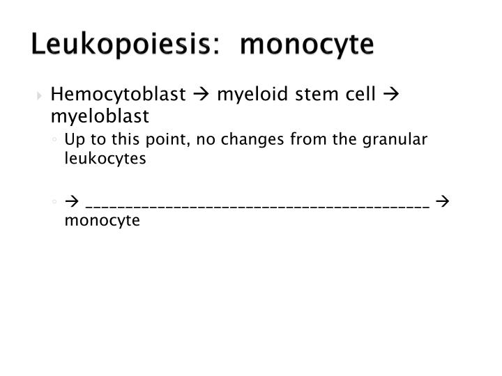 Leukopoiesis:  monocyte