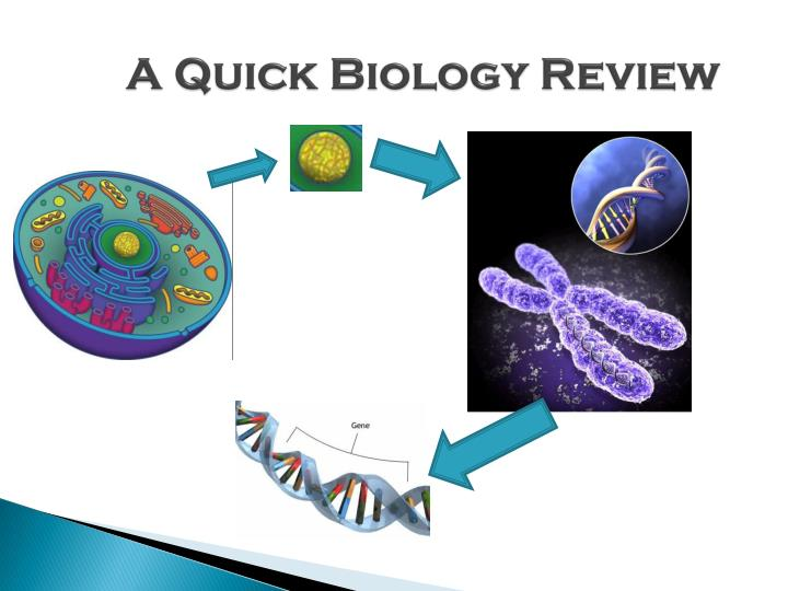 A Quick Biology Review