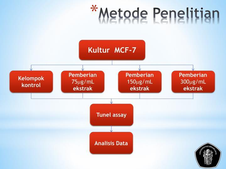 Kultur  MCF-7