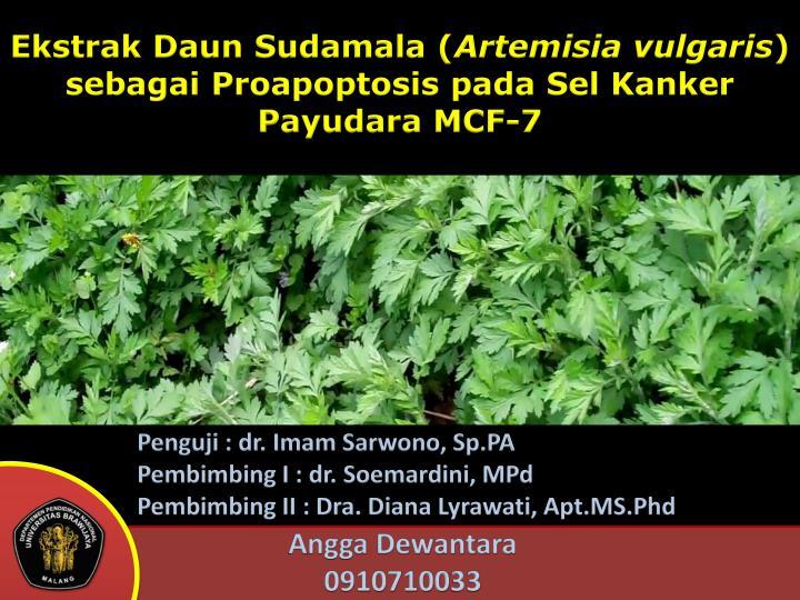 Ekstrak Daun Sudamala (