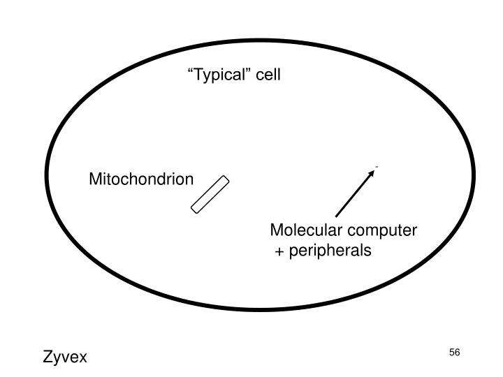 """""""Typical"""" cell"""