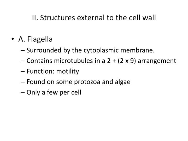 II. Structures external to the cell wall