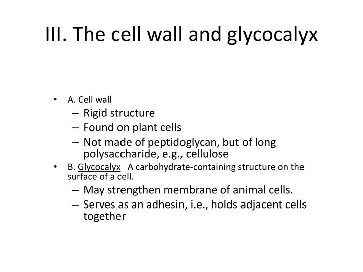III. The cell wall and glycocalyx