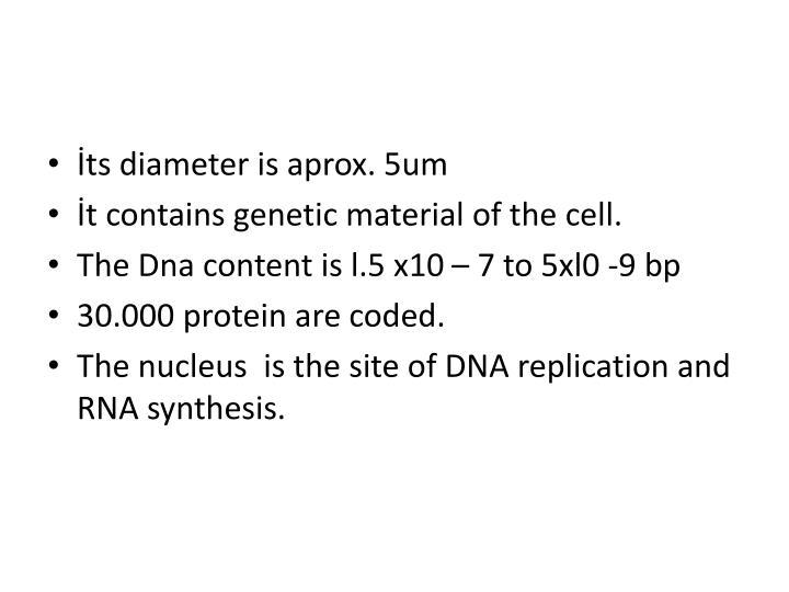 İts diameter is aprox. 5um