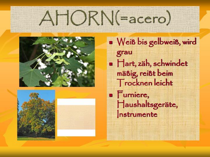 AHORN(=acero)