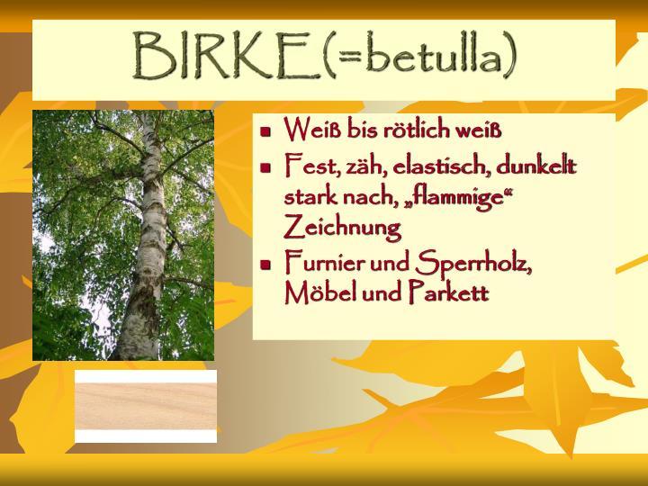BIRKE(=betulla)