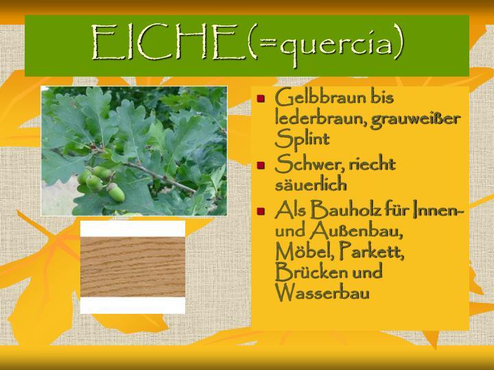 EICHE(=quercia)