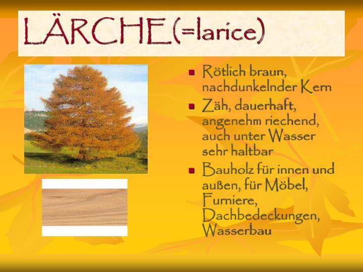 LÄRCHE(=larice)