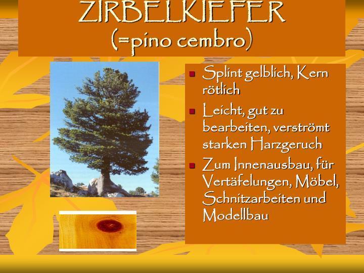 ZIRBELKIEFER